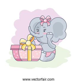 cute female elephant baby with gift box