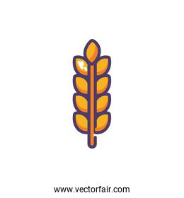 wheat leaves in white background