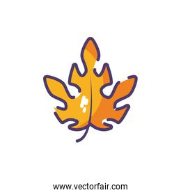 A classic maple leaf on white background