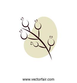 branch with seeds hand draw style