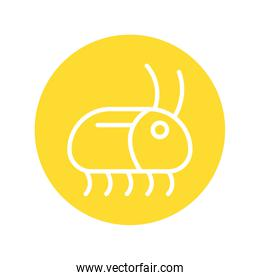 cockroach insect line style icon
