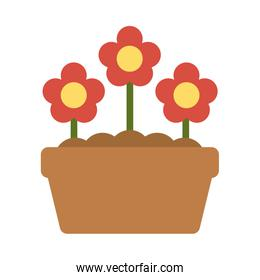 potted flowers on white background