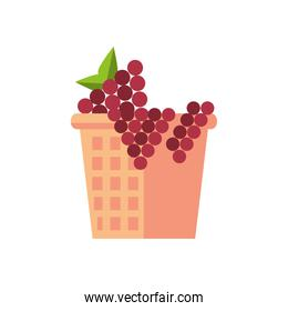 grapes fresh fruits in basket straw