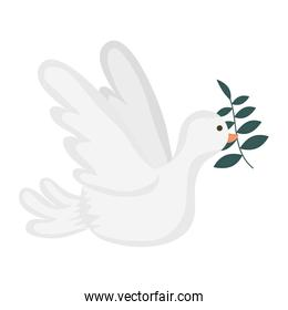 dove flying with olive branch