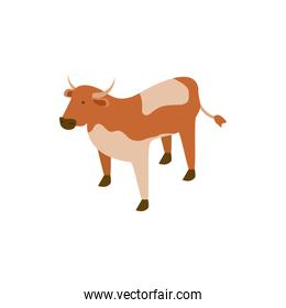 cute cow animal on white background