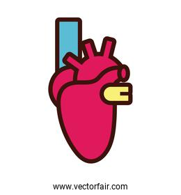 heart human organ line and fill style