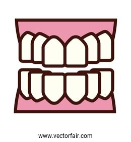 teeth body part flat style
