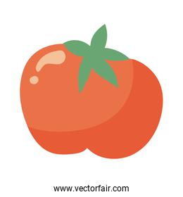 tomato fresh vegetable hand draw style