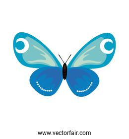 beautiful butterfly insect blue flat style icon