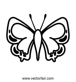beautiful butterfly insect line style icon