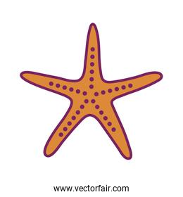 Isolated sea star line and fill style icon vector design