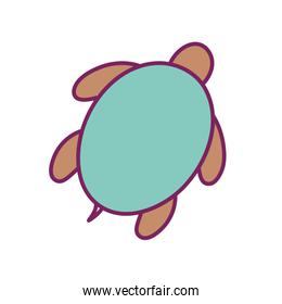 Isolated turtle line and fill style icon vector design