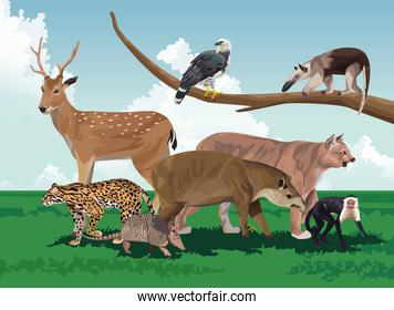 group of wild animals in the field scene