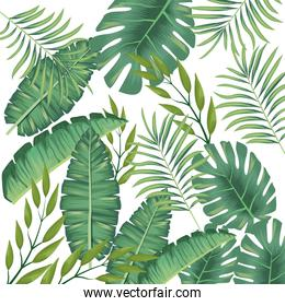 tropical leafs foliage pattern background