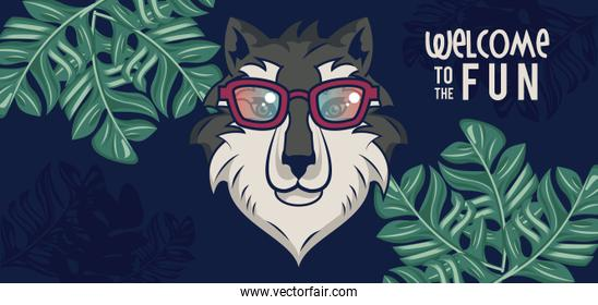 welcome to the fun with wolf using glasses
