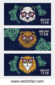 welcome to the fun with animals using glasses