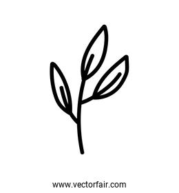 branch foliage leaves organic decoration icon thick line