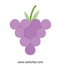 bunch grapes fresh fruit cartoon style icon design