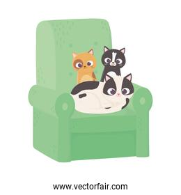 cute cats different breeds in sofa cartoon