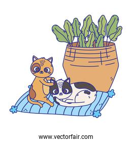 cats make me happy, spotted cats resting in cushion with basket
