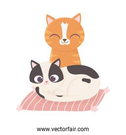 cats make me happy, cute cats in cushion cartoon