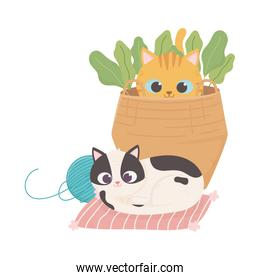 cats make me happy, spotted cat with ball of wool and kitten in basket