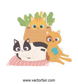 cats make me happy, cute cats with basket wool ball and different breeds