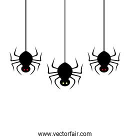 spiders hanging for halloween isolated icon
