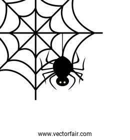 spider of halloween in cobweb