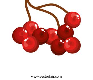 branch with holly fruits traditional christmas isolated icon