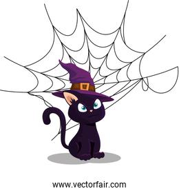 cat of halloween with witch hat and spider web