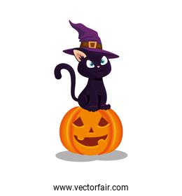 cat with hat witch in pumpkin halloween