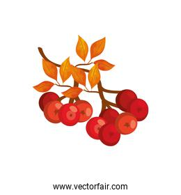 season autumn leafs with fruits isolated icon