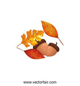 season autumn leafs with nuts isolated icon
