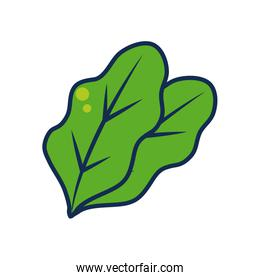 fruits and vegetables concept, spinach leaves icon, line and fill style