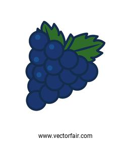 vegetables and fruits concept, bunch of grapes icon, line and fill style