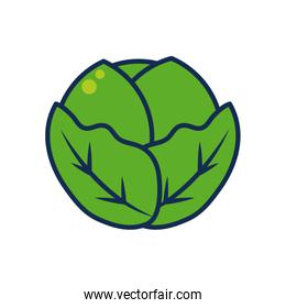 vegetables and fruits concept, cabbage icon, line and fill style