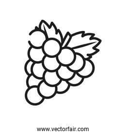 vegetables and fruits concept, bunch of grapes icon, line style
