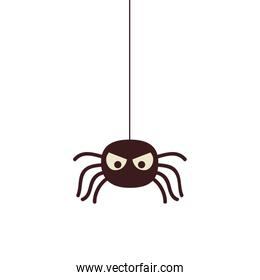 halloween spider insect isolated icon