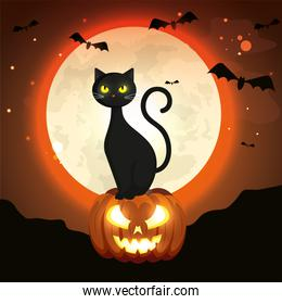 cat in pumpkin of halloween in the dark night