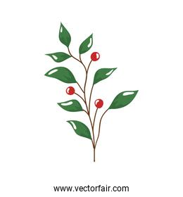 branch with leafs and seeds isolated icon
