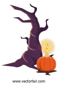 halloween pumpkin with candle and tree
