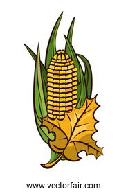 corn cob vegetable and leafs thanksgiving icon