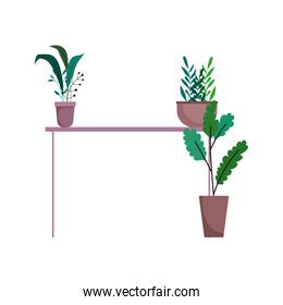 potted plants in table interior decoration isolated icon on white background