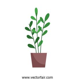 potted plant decoration isolated icon on white background