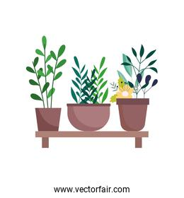 shelf with potted plants flowers decoration gardening isolated icon on white background
