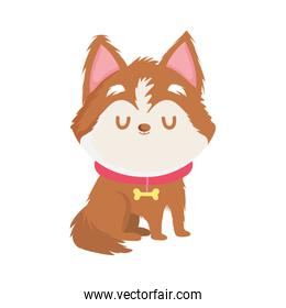 cute little dog with collar pet isolated icon white background