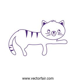 gray little cat pet isolated icon white background line style