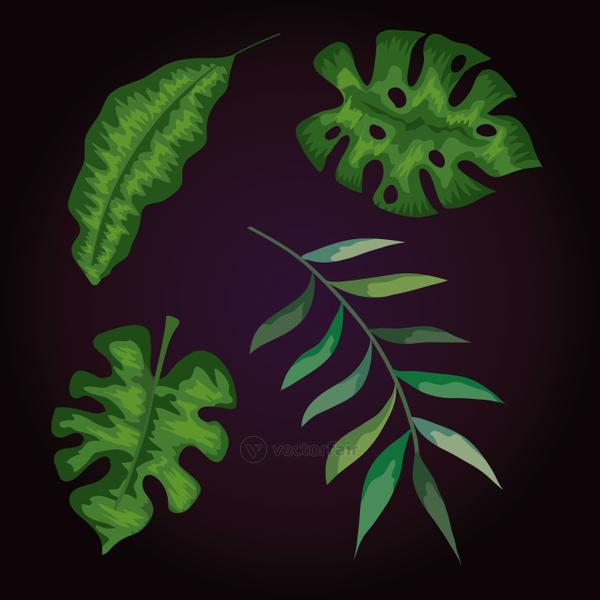 set of branches with leafs tropicals