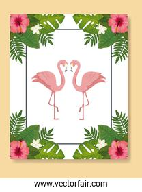flamingos pink animals with leafs nature
